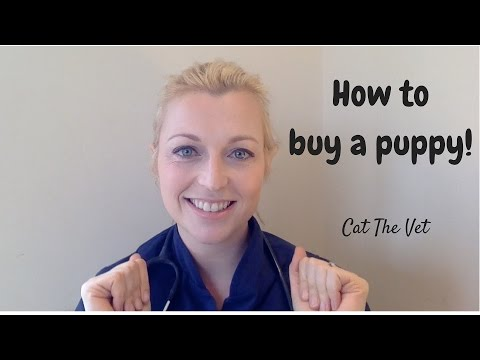 How To Buy A Puppy