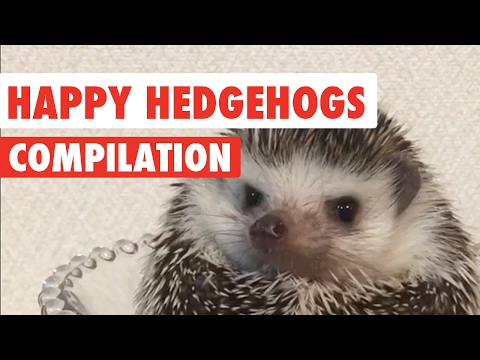 Happy Hedgehogs Cute Pet Video Compilation 2017