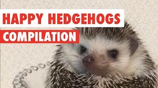 Happy Hedgehogs Cute Pet Video Compilation 2017