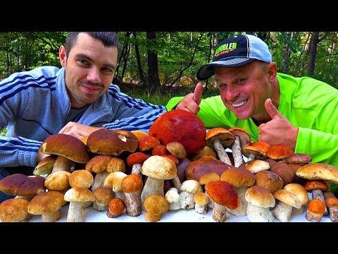 Поход по грибы! Чуть не утонули в болоте! Нашли заброшенный дом в лесу! Жарим грибочки на огне!