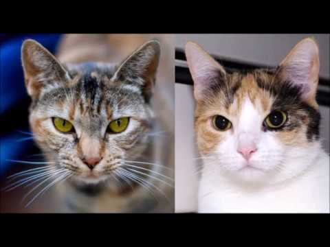 How Do Cats See The World? Cat Vision Vs. Human Vision