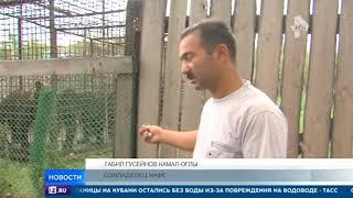 Медведя, откусившего руку посетителю кафе под Иркутском, могут усыпить