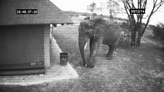 Elephant caught on CCTV cleaning up the trash thumbnail
