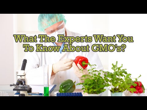 What The Experts Want You To Know About GMO's?