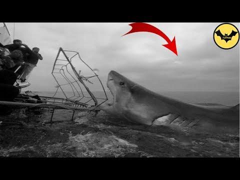 Megalodon Shark in