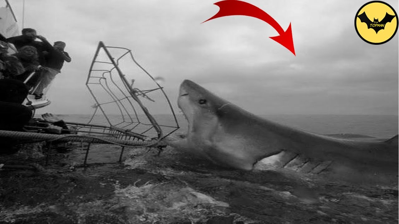 Megalodon in 1933. The Best Megalodon Sighting of All Time. - YouTube
