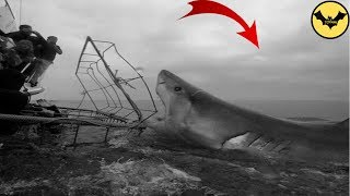 Megalodon in 1933. The Best Megalodon Sighting of All Time.