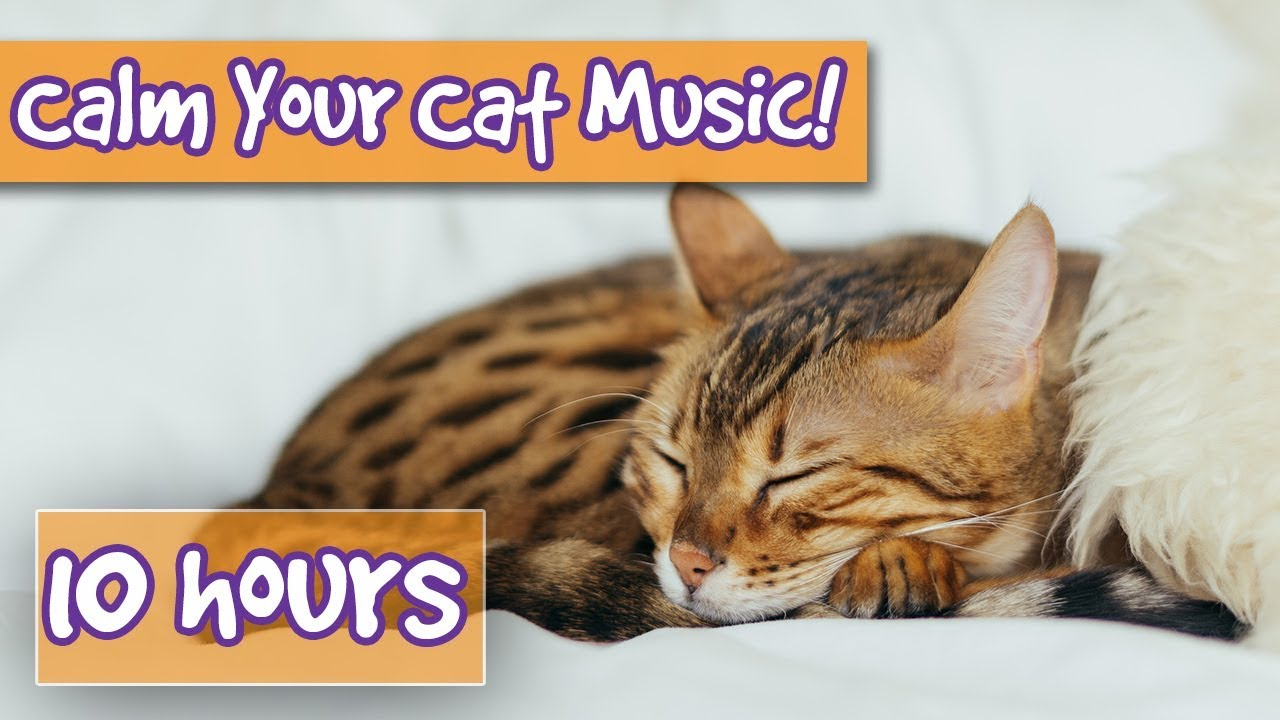How to Get Rid of Anxiety in Cats? Soothe Cat Stress, Make Cats Calm,  Create a Peaceful Environment!