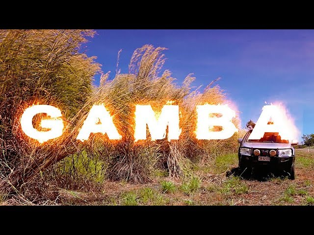 New film spreads the word on the damaging weed Gamba Grass