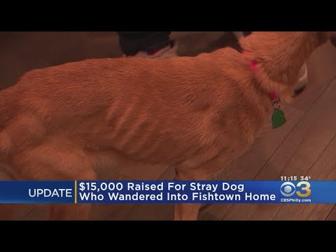 $15,000 Raised For Malnourished Dog That Wandered Into Fishtown Family's Home