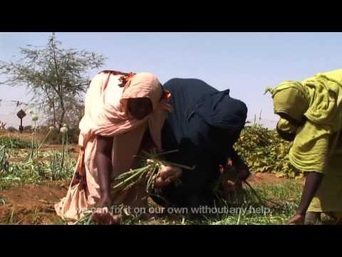 Market gardens in Mauritania