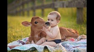 Kumpulan video sapi dan dede bayi lucu banget