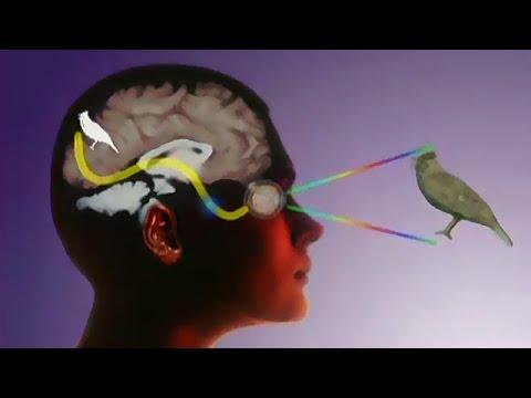 Тайна восприятия. Сознание. Сновидения. Сущность материи