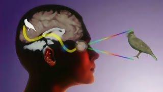 видео Сознание (психология)