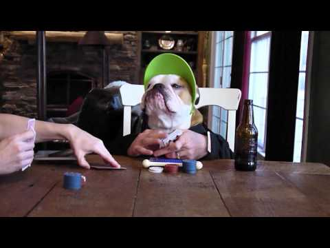 Poker-Faced Bulldog Plays Poker & It's Awesome
