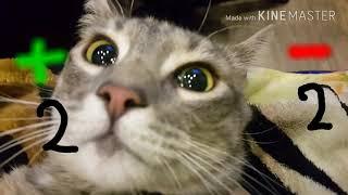 Плюсы и минусы кота в доме