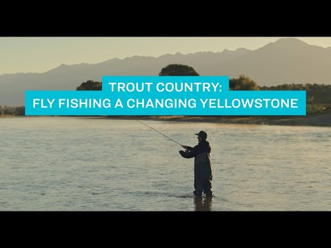 Trout Country: Fly Fishing on a Changing Yellowstone | Sierra Club Video
