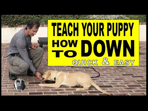How To Teach Your PUPPY or DOG Lie DOWN - Dog Training Video