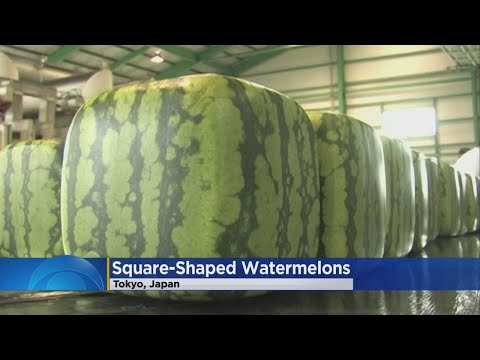 So You Can't Eat These Square Watermelons