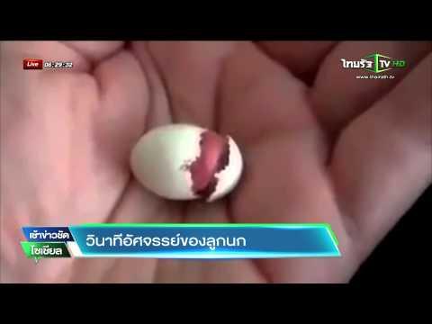 วินาทีอัศจรรย์ของลูกนก    12-06-58   ThairathTV