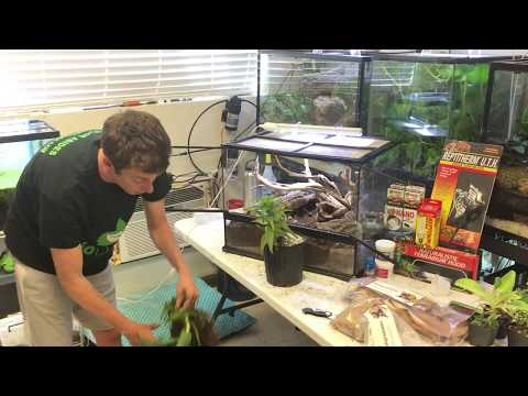 How to setup a bioactive terrarium for Leopard Geckos. Self cleaning, self maintaining.