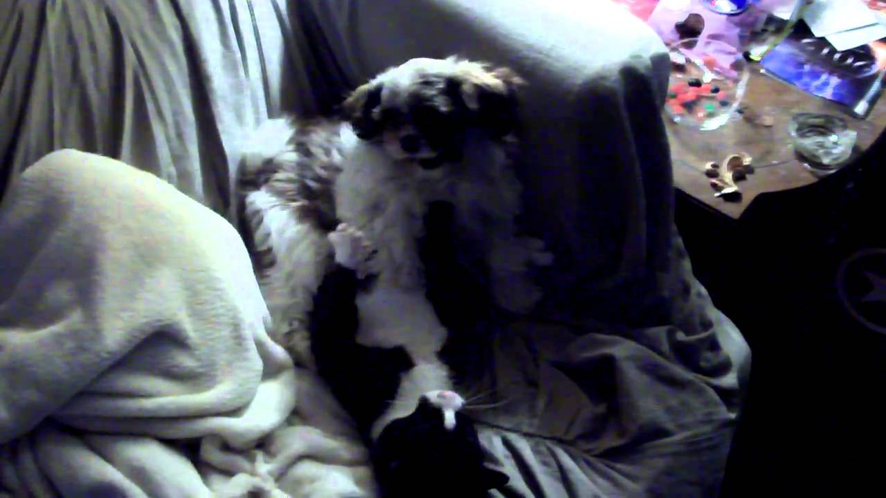 When Cats And Dogs Have Sex 001Avi - Youtube-4488