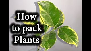 How to Pack a Plant. SHIPPING LIVE PLANTS by Mail
