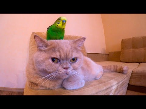 Cat Marsik And Parrot Kesha. Funny Animals.