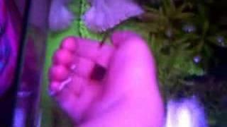 Hand Feeding Fish
