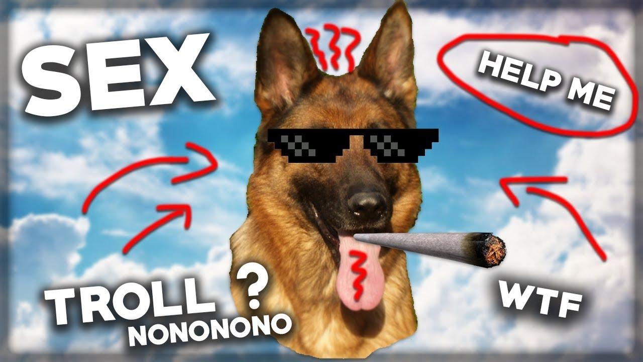 sex mit hunden