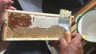 Honey harvest season / miodobranie 2017 - Łękawica, małopolskie Poland