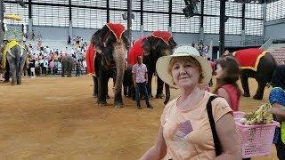 Шоу слонов в парке Нонг Нуч.