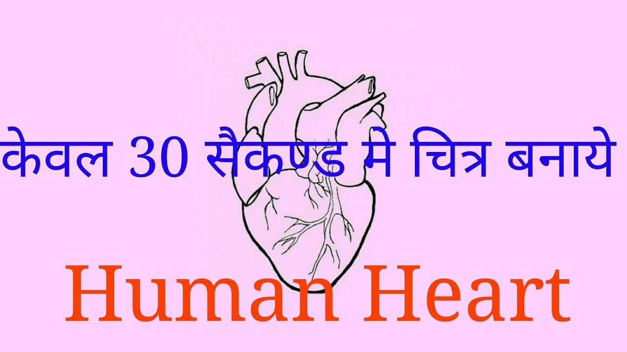 How To Draw Human Heart Diagram Easily Class 10 Step By Step Youtube