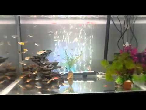 Ikan Kecil Dalam Aquarium Youtube