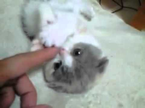 how to get a kitten to stop attacking you