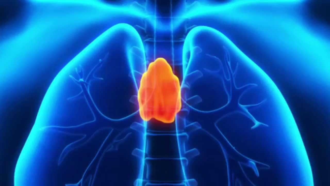 Stress And The Thymus Gland Youtube