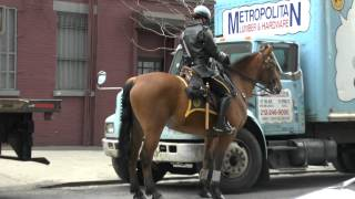 NYPD's lady cop on a horse