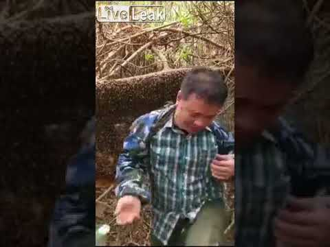 Man was stung by bees