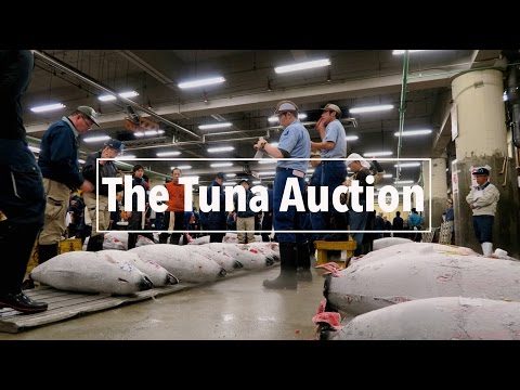 Tuna Auction at Tsukiji Fish Market in Tokyo | A Travel Movie