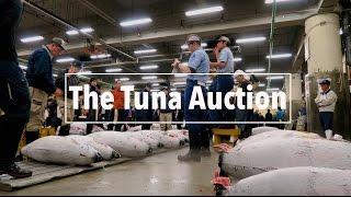 Tuna Auction at Tsukiji Fish Market in Tokyo | A Travel Movie