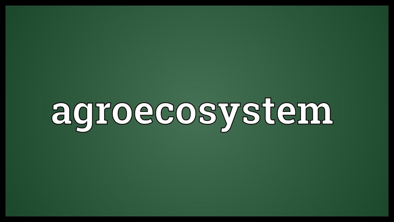 agroecosystem Agroecosystems are created by amended as a result of human activity, natural ecosystems (forests, meadows and pastures) that are partially survived and still exist between agricultural areas.