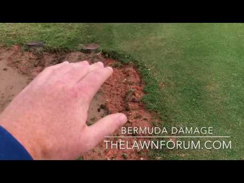 How to repair damaged areas of Bermuda Grass Lawns for FREE!