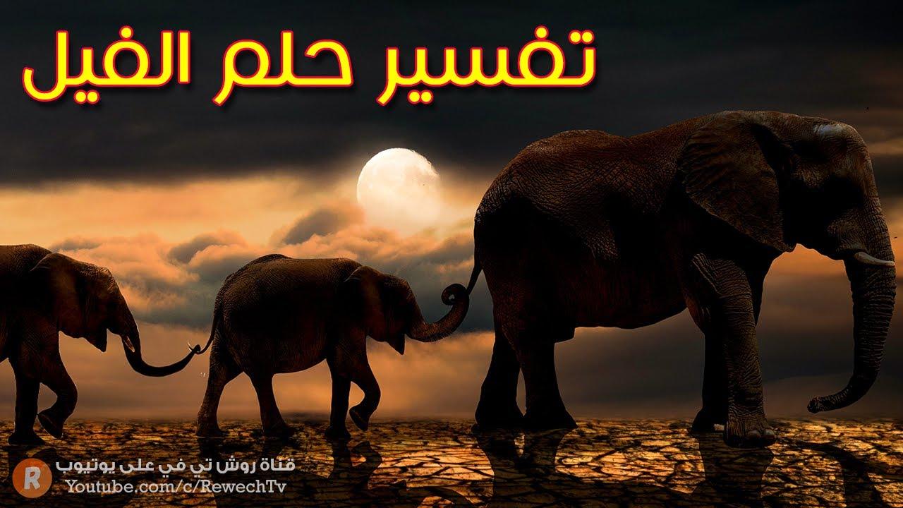 تفسير حلم الفيل ما معنى رؤية الفيل في المنام ؟ سلسلة تفسير الأحلام