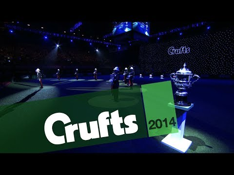 Standard Poodle wins Crufts Best in Show 2014