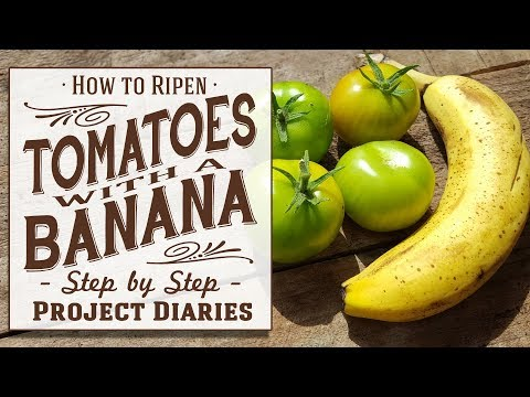 ★-how-to:-ripen-tomatoes-with-a-banana-(a-full-off-the-vine-tutorial)