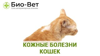 Кожные болезни кошек. Ветеринарная клиника Био-Вет.(Подробнее на сайте: http://www.bio-vet.ru/kozhnyye-zabolevaniya-u-koshek Наш форум http://www.bio-vet.ru/forum-1 Официальная группа в контакте..., 2017-01-13T11:26:25.000Z)