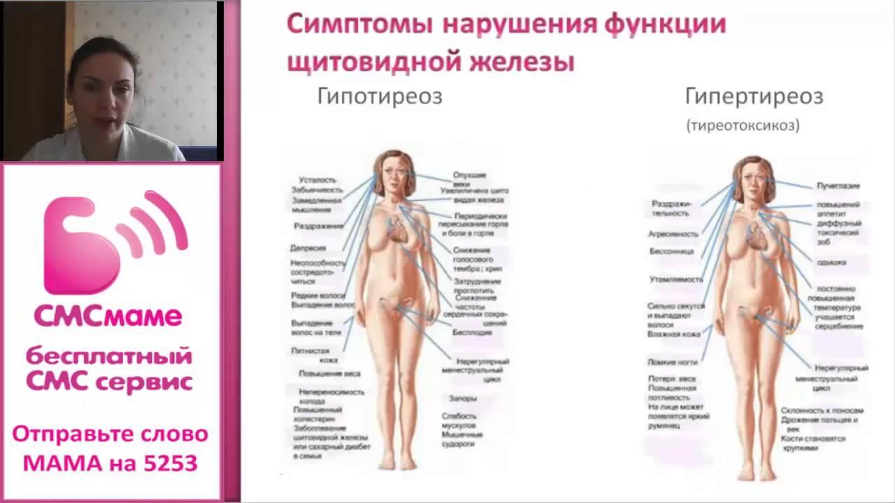 Щитовидная железа при беременности