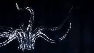 Скачать Alina Baraz Galimatias Drift Animated Video