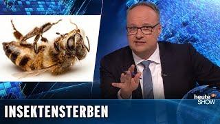 Artenschutz: 1,8 Millionen Bayern wollen die Bienen retten