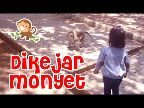 ada-kerajaan-monyet-di-atas-bukit,-raja-monyetnya-gede-banget!!!